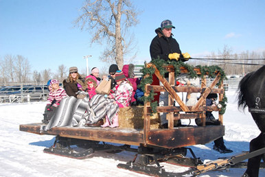 Large fun sleigh ride at Millarville Christmas Market!