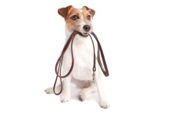 你是否应该允许房客在你租的房子里养宠物?