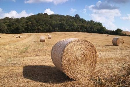 在搬到农村地区之前你应该知道什么