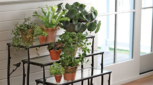 Houseplants for Louisville home