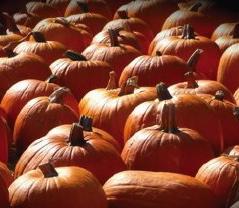 Pumpkins at Huber's