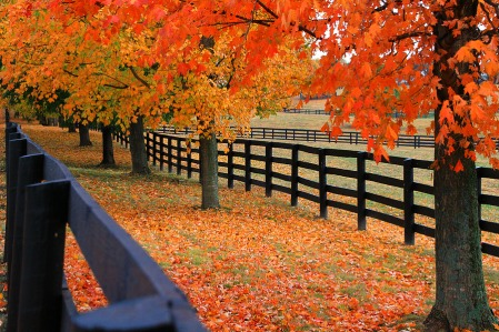 Fall in Louisville Kentucky