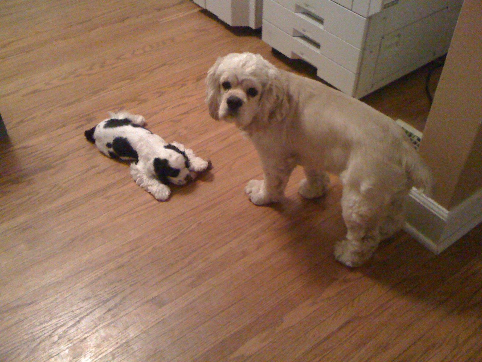 dog, poppy