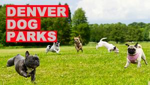 Best Dog Parks in Denver