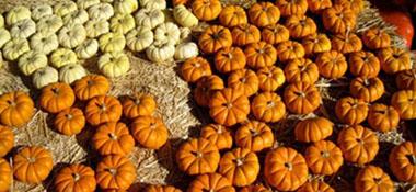 Pumpkin patch in Manhattan Beach