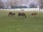 Prospect KY Horse Farm
