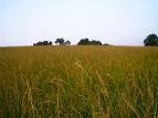 Henry County Field