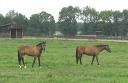 Horses in Oldham County