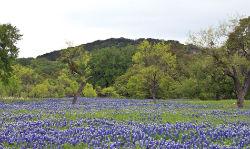 Brock Texas