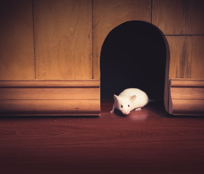 mice can affect home sales