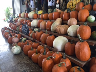 Gallrein Farms Pumpkins