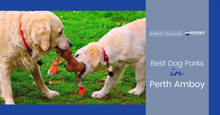 Best Dog Parks in Perth Amboy: Discover Perth Amboy Dog Parks