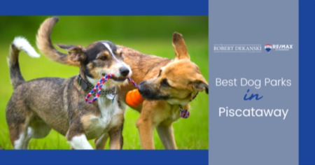 Best Dog Parks Near Piscataway, NJ