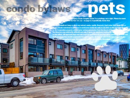 Buying with Pets! Condo Policies & Bylaws