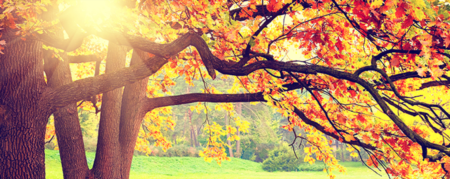 Common Things Overlooked when Buying a Home in the Fall