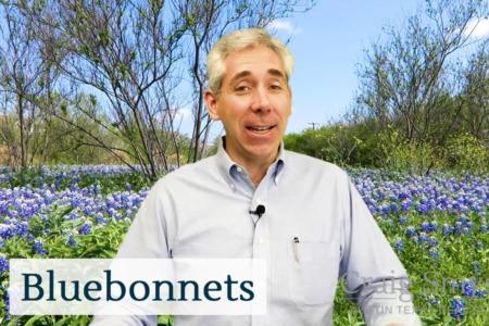 Discover Austin: Bluebonnets - Episode 8