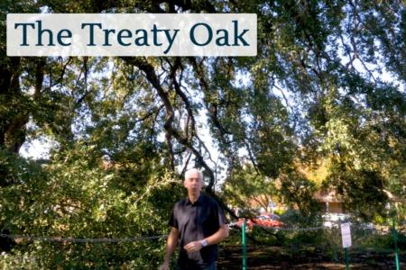 Discover Austin: The Treaty Oak - Episode 65