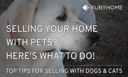 What to Do With Pets When Selling Your Home [Pro Tips]
