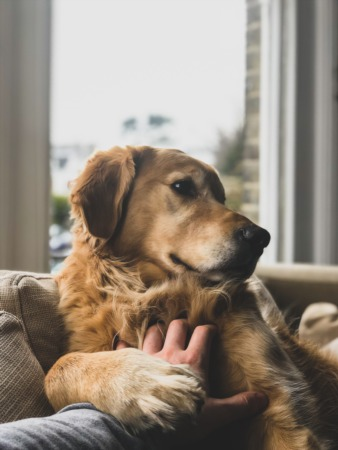 13 Ways to Secure Your Fur Babies During a Hurricane