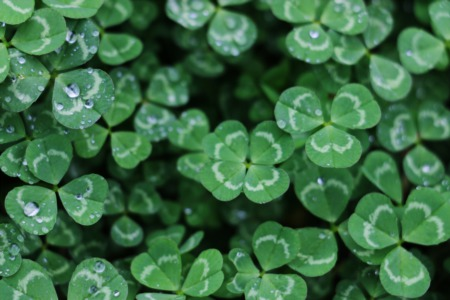 Lucky 7: Seven Ways to Celebrate St. Patrick's Day in the Triangle
