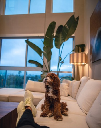 What to look for in your 'forever home'