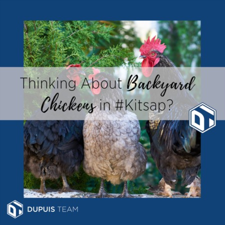 Thinking About Backyard Chickens in Kitsap?