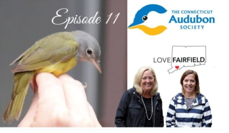 LoveFAIRFIELD Episode 11 - The Connecticut Audubon Society