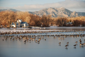 Goosehaven - Lake Front Properties & Mountain Views!