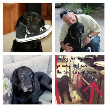 Jasper - A Shelter Dog Story