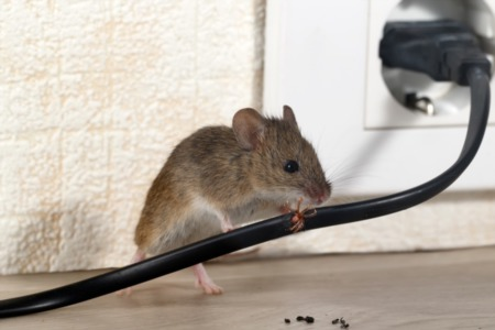 Tips for Preventing and Removing Common Home Pests