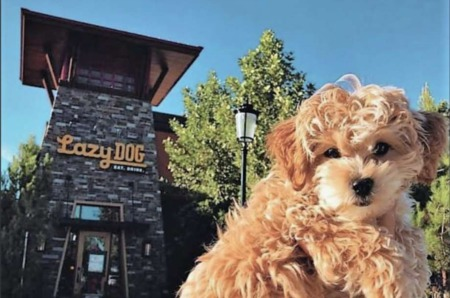 Pet-friendly restaurant Lazy Dog, with a menu for your pups
