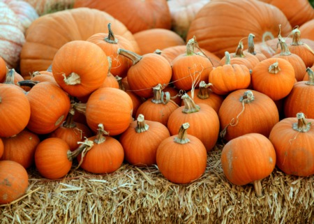 Top 5 Eastside Pumpkin Patches