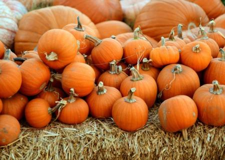 Top 5 Eastside Pumpkin Patches