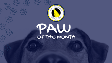 January Paw of the Month ft. NW Canine Coalition