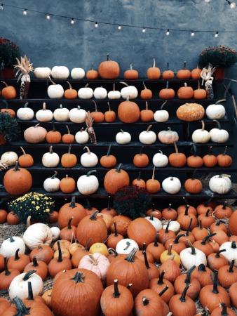 Boulder County's Best Pumpkin Patches