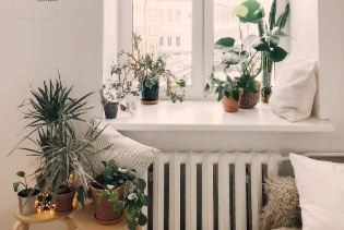 Indoor plants to decorate the home and purifies the air