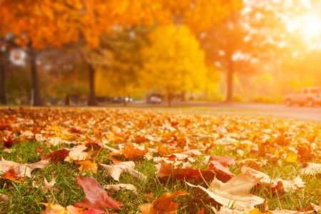 Should You Sell Your Home This Fall? Five Reasons Why You Should!