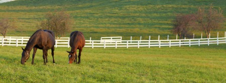 Horse Farms for sale in Hampton Roads - Boarding, Riding and Training