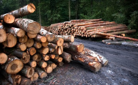 Builders Voice Concern as Lumber Prices Rise Again