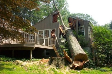 Fallen Tree Liability in Georgia