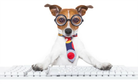 National Take Your Dog to Work Day