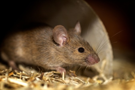 Keeping Mice Out of your Home
