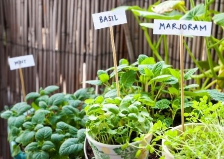 How to Start an Herb Garden in Your Home