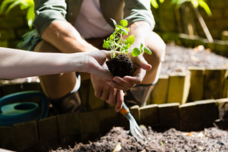 Best Plants for Your Garden in South Carolina