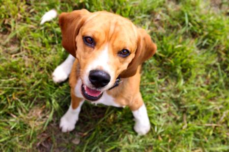 Moving to Charleston | Charleston's Dog Friendly Restaurants