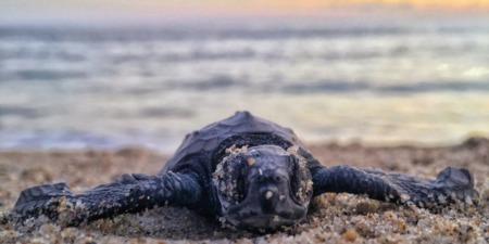 Sea Turtle Season