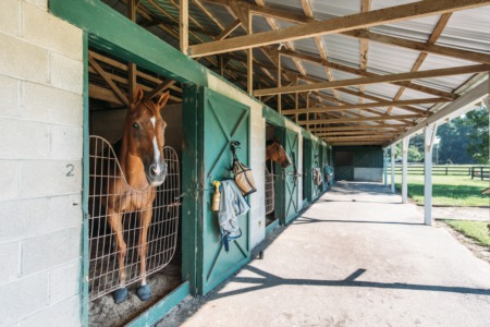 Horse Farm for Sale Charleston, SC!