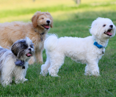 Popular Charlotte dog parks for you and your furry friends