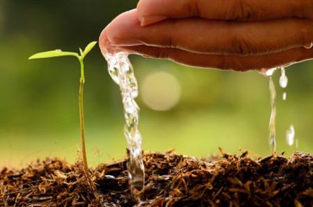 Green Thumbing It: Community Gardens in Billings
