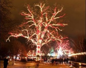 10 Best Things to do this Winter in Chicago